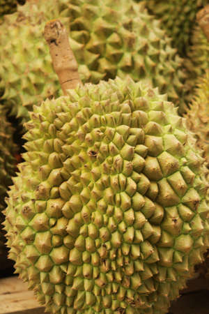 fleshy: Durian from thailand