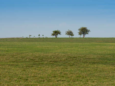 brownish: Brownish grass field in the meadow. Stock Photo