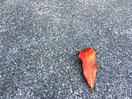 Red dried leaf drop on grainy and small stone floor. Classic surface texture background. Imagens