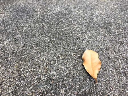 Brown dried leaf drop on grainy and small stone floor. Classic surface texture background.