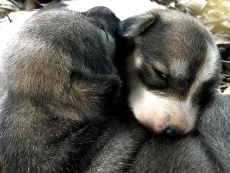 Stray puppy are hug to get warm in cold weather.