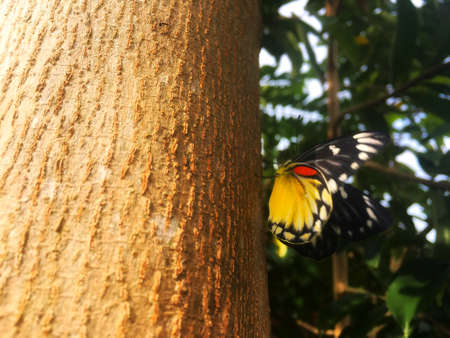 Beautiful black and yellow butterfly catch on the brown trunk after reborn from caterpillar.