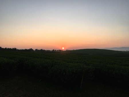 Sunrise behind mountain in the morning with dark tea tree garden in the field. Stok Fotoğraf