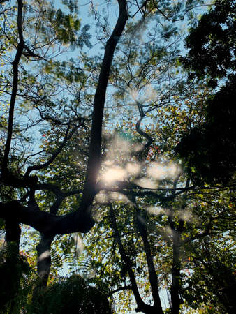 Sunlight through leaves on top tree under blue sky in the park. Blur image with silhouette intentionally.