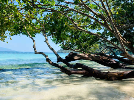 Transparent sea wave under green branch. Beautiful blue sea and white sand on the beach under blue sky. Imagens