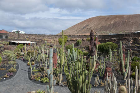 cactus species: Cactus Garden Lanzarote you can visit to see more than 500 species of cactus Editorial