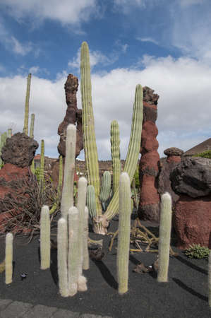 cactus species: Cactus Garden Lanzarote you can visit to see more than 500 species of cactus Stock Photo