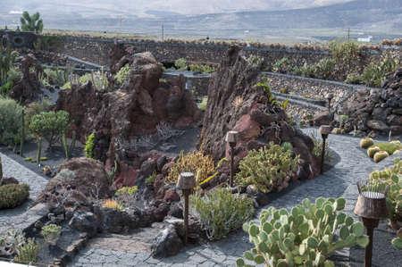 cactus species: Jard?n de Cactus de Lanzarote usted puede visitar para ver m?s de 500 especies de cactus