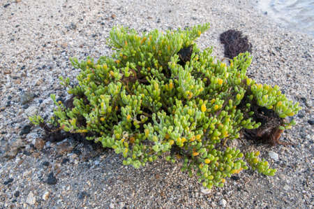 green algae that was in the sea Stock Photo