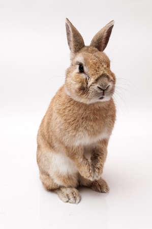 funny rabbit with white dress Stock Photo