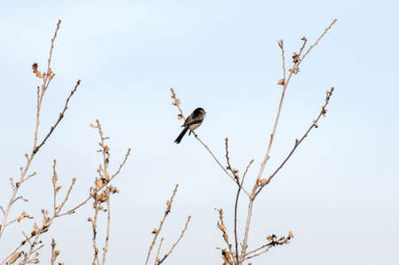 warbler perched on the tree watching there to eat Stock Photo - 17325375