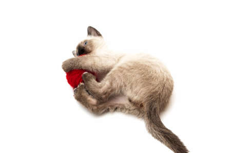 cat drinks on a white background photo