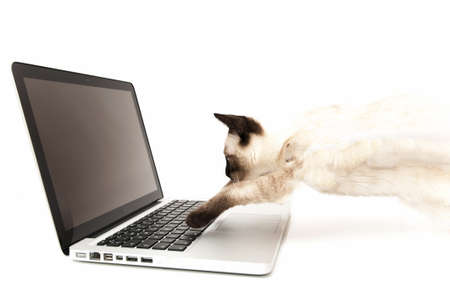 Cat looking at computer on a white background Stock Photo