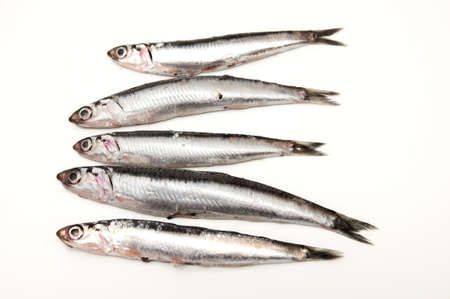 sardines on a white background photo