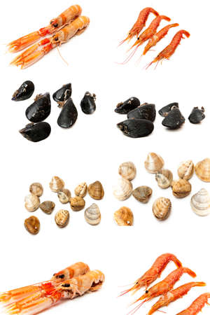 collage types of seafood and shellfish on a white background photo