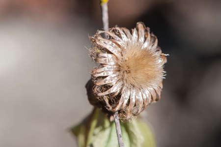 simulating: simulating small plant autumn brown Stock Photo
