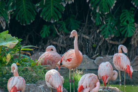 flamingos searching for food by the lake photo