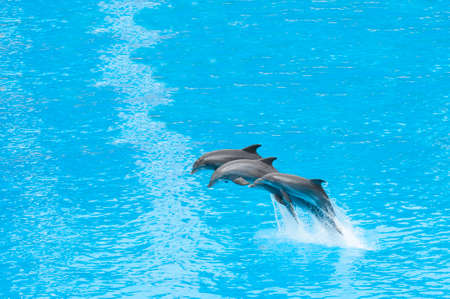 dolphins swimming in the saltwater pool photo
