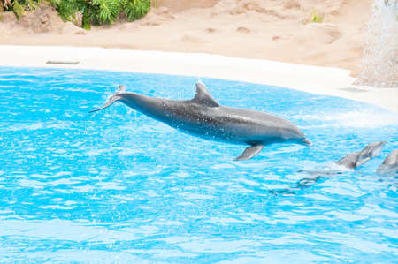 salt water pool with fish. Dolphins Swimming In The Saltwater Pool Stock Photo - 31599835 Salt Water With Fish