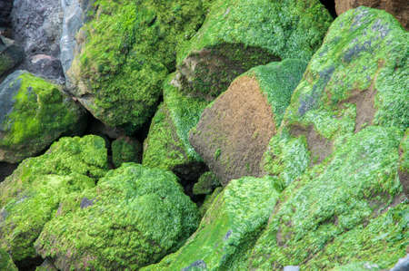 seeping: stones with moss wet from water seeping Stock Photo