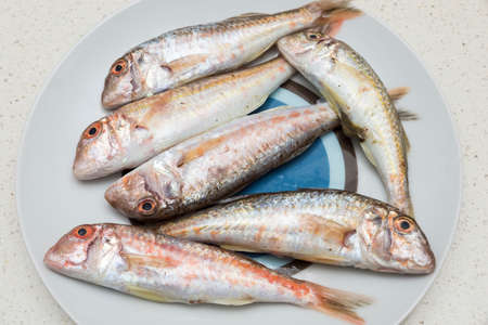 bluefish: mullet small stalls on a plate