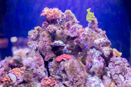branching coral: coral colors in the bottom of the ocean Stock Photo