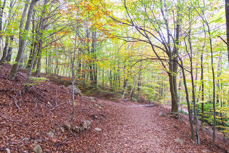 observed: Montseny natural forest where nature is observed