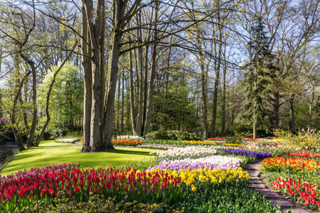 multicolored: Park with multi-colored spring flowers
