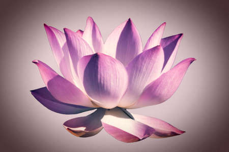 Artistic colorful Lotus flower graphism