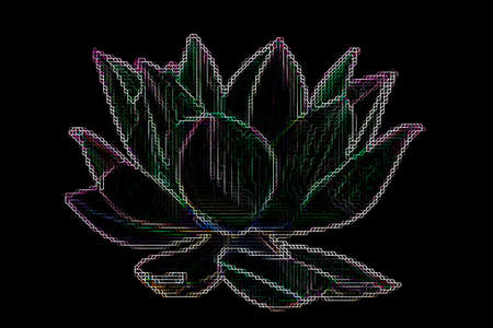 Artistic colorful Lotus flower graphism on a black background