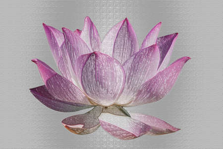 Artistic painted effect Lotus flower graphism