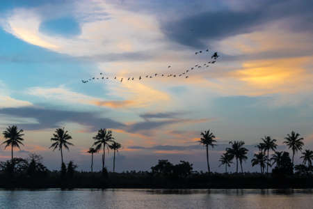 backwater: Sunset on the Kerala backwater, palm trees  and wildlife in India Stock Photo