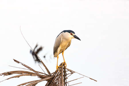 backwater: Water gulls bird from Backwater in Kerala in India