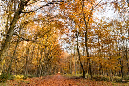 Walking at Autumn in the Fontainebleau Forest near Paris