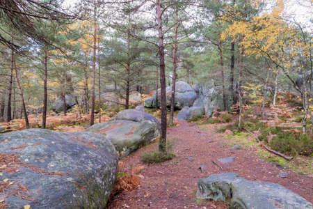 Caminando en otoño en el bosque de Fontainebleau, cerca de París