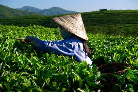 thee plantage werknemer