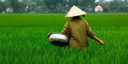 Rice field worker Stock Photo