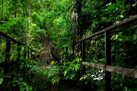 Bridge in rainforest Stock Photo