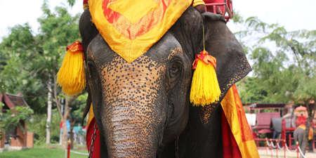 A close-up portrait of an elephants head