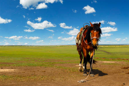 A horse in the grassland of Mongolia
