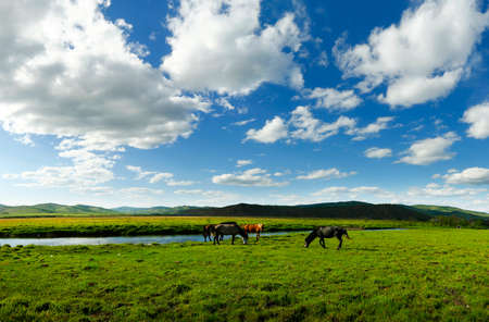 Horses in the grassland of Mongolia