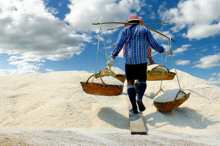 Harvest in salt field