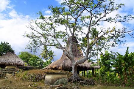 traditional hut of inhabitant in sumba island -indonesia 写真素材