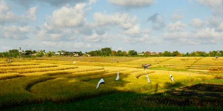 View of green rice field in Bali at Bali with balinese temple - Indonesia