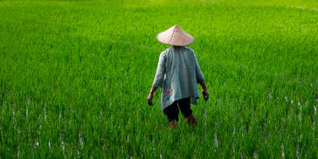 Balinese worker in rice field with a bamboo hat
