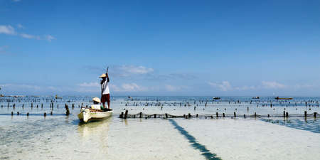 farmer in boat harvesting sea weed in underwater plantation Banque d'images