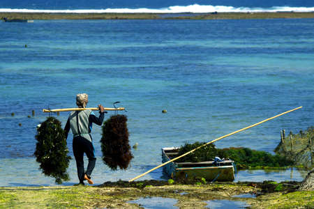 view of the coast with beach and coral at bukit in bali -farmer in boat harvesting sea weed in underwater plantation-indonesia