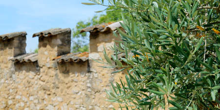 Olive tree facade of stone
