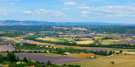 plantation of bunch of lavender with landscape of village in provence -south of france -