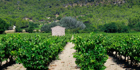 mediterranean estate vineyard in the south of france